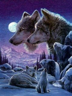 Wolf art, beautifully done Madara Wallpaper, Wolf Wallpaper, Beautiful Wolves, Animals Beautiful, Cute Animals, Wolf Photos, Wolf Pictures, Indian Wolf, Native American Wolf