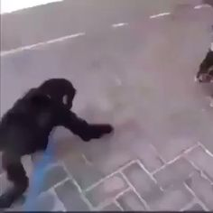 Two brothers were rescued and treated at different NGOs, and then reunited ☺️ - ocio - Animales Cute Funny Animals, Cute Baby Animals, Funny Cute, Animals And Pets, Wild Animals, Beautiful Creatures, Animals Beautiful, Cute Animal Videos, Chimpanzee