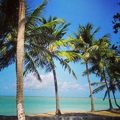 Maceió - Brasil Você não precisa necessariamente ir ao Caribe para curtir paisagens dignas de cartão-postal, com águas cristalinas, praias de areia branca e coqueirais que margeiam a orla. Nosso Brasilzão, ou mais especificamente o litoral alagoano, também tem tudo isso! ---------------------------------------------------- Foto: NiKi Verdot | @1001dicasdeviagem . www.1001dicasdeviagem.com.br . YouTube: 1001 Dicas de Viagem . ---------------------------------------...