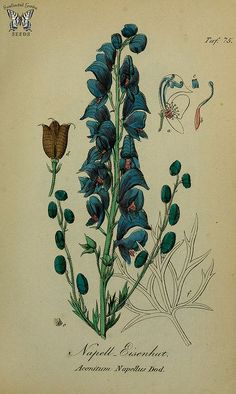 From our collection of botanical photographs, illustrations, and paintings.