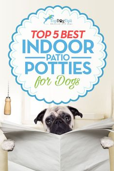 Best Indoor Pet Patio Potty for Dogs: Top 5 Dog Toilet Solutions (2017). In recent years, companies have released tons of different dog potties that vary in quality and costing anywhere from $10 – $200. But which one is the best indoor pet patio potty for dogs, and how much should you spend on it? We've decided to take a look. #dogs #indoor #patio #potty #puppies #puppy #housebreaking #toilet #best #review