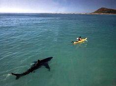 Aruba P49MR Shark