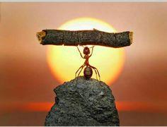 Go ant