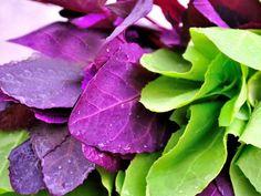 Loboda este o alta planta care, in aceasta perioada, se gaseste din plin pe tarabele din toate pietele. De aceea, ar trebui sa profitati la maxim Cabbage, Bob, Vegetables, Youtube, Plant, Bob Cuts, Cabbages, Vegetable Recipes, Youtubers