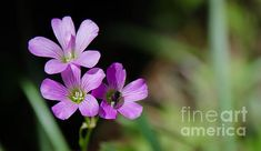 Floral 3 by Andrea Anderegg  #flowers #floral #prints #decor #nature #wildflower