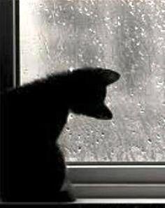 ☂ Kitty watching rain drops on the glass.