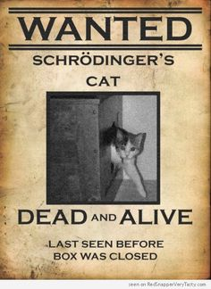 WANTED Schrödinger's cat - Dead and Alive #catoftheday