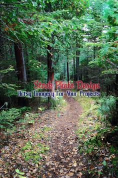 Pathway in the Woods 2 -