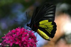 Butterfly Photography 10