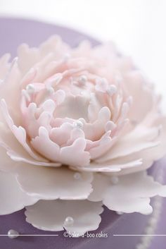 Close up sugar peony by Bake-a-boo Cakes NZ, via Flickr