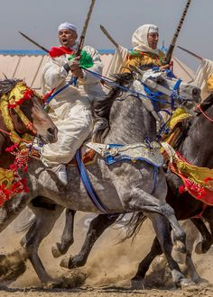 Berber horse / Fantasia / Tbourida tack