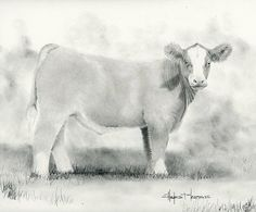 Peaches n Cream Show Steer Charcoal Print by HayesMartensGallery