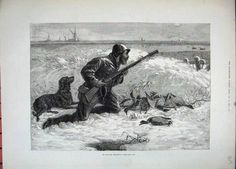 Illustrated London News_Wild Duck Hunting con un Newfoundlader Minore o Labrador_1800 secolo.