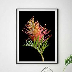 Eucalyptus Blossoms Photography Print Australian Native | Etsy Australian Photography, Australian Native Flowers, Professional Photo Lab, Flower Artwork, Gifts For Nature Lovers, Photo Colour, Large Wall Art, Vivid Colors, Nativity