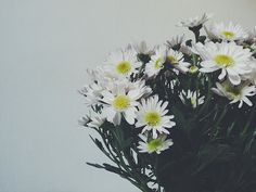 6 on 6: flower obsession
