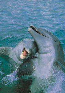 Dolphins always look so full of joy. The free ones anyway.