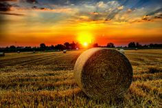 hay field at sunset