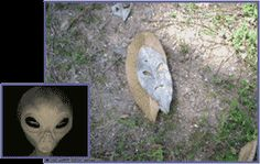 Oddly enough the photographer had been engrossed in a study of UFOs the day prior to taking the photo.     alienhead.gif  Note any resemblance? Still more interesting is the light and shadow play on the ground to the right of the leaf which is a bit difficult to see but has been outlined below to show yet another alien face.