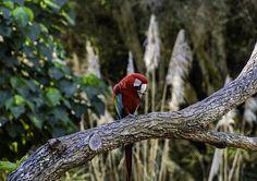 Beautiful birds showing off at Currumbin Zoo  #thisisqueensland #currumbin #queensland #australiagram #native #naturesbeauty #naturephotography #birdphotography #birdwatching #ig_nature #wildlife #portrait #currumbinwildlifesanctuary #nature #natureporn #wildbird #birdsofprey #birdsofinstagram #ig_discover_australia #creativephotography #australia_shotz #ig_australia  #tropical #explore #goldcoast #discoverqueensland #instanature #vibrant #ig_exquisite by is0_sh33p http://ift.tt/1X9mXhV