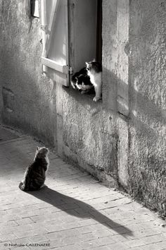 Les chats de Barjols by Nathalie Callenaere on 500px Great light and texture. Amusing as well.