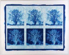 Seven Images of a Tree de Mona Rhys