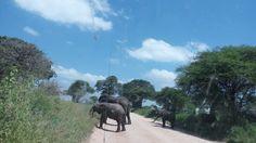 Most Booked TourVolunteerWhat We DoPlace To StayYour African SafariTourist LinkContactLinked in Ngorongoro crater Tour 6days safari Ngorongoro crater | Justo Mfinanga | Pulse | LinkedIn