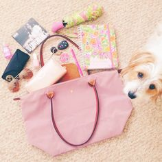 What's in my Longchamp, featuring Marco the Jack Russell