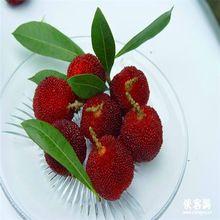 10 unids/bolsa, bonsai red bayberry semillas, muy dulce delicioso de la fruta semillas, suculentas semillas de árboles, planta de los bonsai B016(China (Mainland))