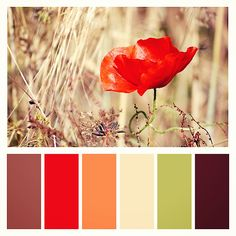 Pretty natural colors for decorating