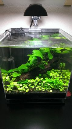 3 Gallon Bedside Shrimp Tank - The Planted Tank Forum Aquarium Store, Nano Aquarium, Home Aquarium, Aquarium Design, Aquarium Fish Tank, Aquarium Terrarium, Planted Aquarium, 3 Gallon Fish Tank, Nano Cube