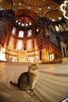 Hagia Sophia's resident cat, Istanbul #Istanbul #cats #travel