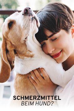 Wenn unsere Hunde Schmerzen haben, greifen wir oft zu Schmerzmitteln. Doch wie sinnvoll sind Schmerzmittel tatsächlich? Worauf muss man besonders achten? Und wie erkennt man überhaupt, dass der eigene Hund unter Schmerzen leidet? Leiden, Pet Dogs