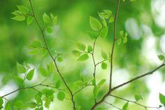 (3)明るい木漏れ日を背景にする