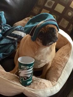 Pug Roxy Eagles fan