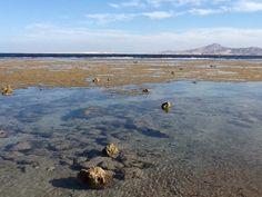 #nabq Bay sharm Egitto
