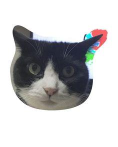 ぐら🐈 9歳 誕生日おめでとう🎉🎂🎁🎈 .  happy birthday!!!❤️😸 . #birthday  #gura #cat #cats #catstagram #catsofinstagram #catsofinstagram #catslovers #instgood #girl #tuxedocat #8 #love #happy #cute #tbt #猫 #愛猫 #ねこ部 #タキシードキャット #ぐらいずむ #ねこばか #はちわれ #🐈 #🐱 #❤️