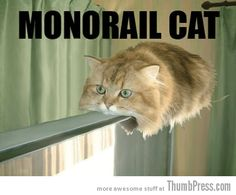 Get a Monorail Cat funny picture from Cats. You can get dozens of other funny pictures from Cats. Here are some samples of funny words: monorail, cat Funny Cat Photos, Funny Captions, Funny Pictures, Funny Images, Animal Memes, Funny Animals, Cute Animals, Animal Humor, Crazy Cat Lady