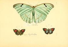 008-proacis, tenebrio, phitophilus, nyctozoilus, ammophorus, heliofugus, psammetricus, opatrum, adelium, blapstinus      ...