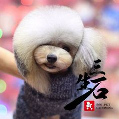 dog care,dog grooming tips,dog ideas,dog nail trimming,dog ear cleaner Dog Grooming Styles, Dog Grooming Shop, Dog Grooming Salons, Poodle Grooming, Dog Grooming Business, Maltese, Creative Grooming, Poodle Cuts, Dog Haircuts