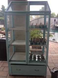 City Gardening Arizona Garden Girl: My Mini Greenhouse Diy Mini Greenhouse, Greenhouse Kitchen, Cheap Greenhouse, Indoor Greenhouse, Backyard Greenhouse, Greenhouse Plans, Greenhouse Wedding, Arizona Gardening, Gardening Tips