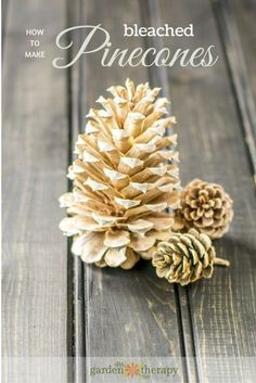 Bleached Pinecones: Materials: Pinecones (various shapes and sizes) Bleach Large bucket Water Rubber Gloves Bricks or Large Rocks