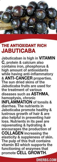 Tips for Anti Diet - Jabuticaba high in Vitamin C, protein, calcium, antioxidants good amount of iron phosphorus while having anti-inflammatory anti-cancer properties. The fruits skin is used for treating asthma, hemoptysis, chronic inflammation of tonsils diarrhea. Promotes healthy lustrous hair growth prevent hair loss. Nutrients in its peel rejuvenate, hydrate encourages production of collagen increasing skin elasticity. The pulps vitamin B3 supports functioning of enzymes c...