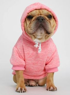The Frisco Dog Hoodie Cute Dog Clothes, Cute Dog Outfits, Designer Dog Clothes, French Bulldog Puppies, Cat Costumes, Dog Hoodie, Dog Sweaters, Dog Accessories, Dog Design
