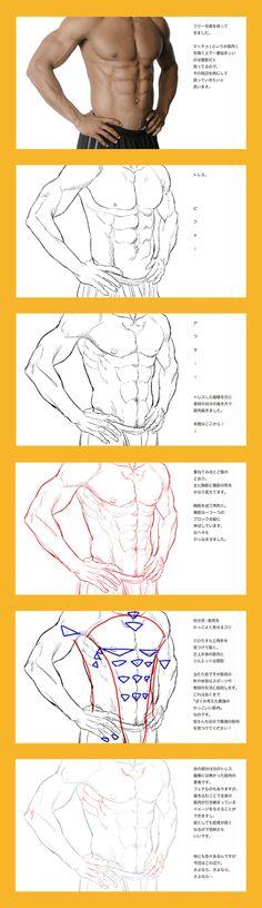 筋肉人体考察まとめ