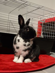 Bunny holds a proud pose - December 28, 2014