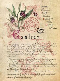 BOS ~ Comfrey page
