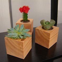 Reclaimed wood blocks for planting succulents! I love it! Have you seen these @Mandy?