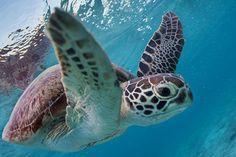 ぷかぷかと水中散歩 #渡嘉敷島 #okinawa #沖縄旅行 #沖縄観光 #沖縄 #沖縄love #離島 #冲绳 #오키나와 #海亀 # #blue #cute #かわいい #可愛い  #snorkeling #honu #turtle #亀 #fly #カメラ女子 #ファインダー越しの私の世界 #tokyocameraclub #underthesea