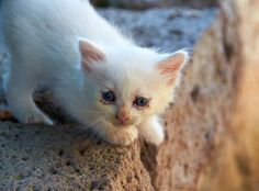 End Euthanization in U.S. Animal Shelters - Care2 News Network