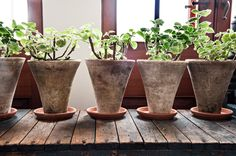 An Eden of Houseplants - Slide Show - NYTimes.com i want those pots